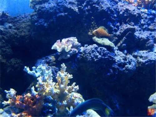 关于西安海洋科技小知识(2)